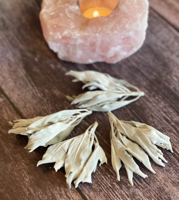 Grandfather White Sage Tips